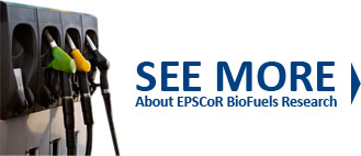 See More about EPSCoR Biofuels Research